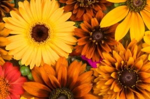 Celebrate The Fall Season With Houston Flowers Elaine S Florist